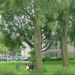 Kromme Rijn Utrecht Foto Steenhuis Stedenbouw